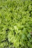 абстрактная зеленая текстура Стоковое Фото