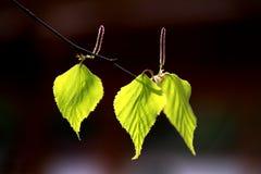 Абстрактная зеленая естественная предпосылка стоковая фотография