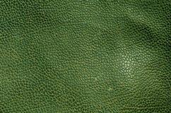 Абстрактная зеленая кожаная текстура Стоковое Фото