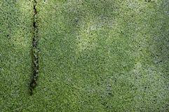Абстрактная зеленая предпосылка, лист завода, макрос Стоковое Фото