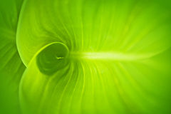 Абстрактная зеленая предпосылка лист Стоковая Фотография