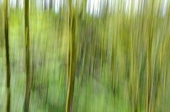 Абстрактная зеленая предпосылка нерезкости движения леса Стоковые Изображения