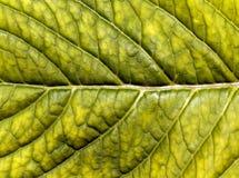 абстрактная зеленая текстура листьев Стоковые Фотографии RF