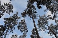 абстрактная зима неба изображения фрактали Стоковое фото RF
