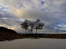 абстрактная зима неба изображения фрактали Стоковые Фотографии RF
