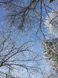 абстрактная зима неба изображения фрактали Стоковая Фотография RF
