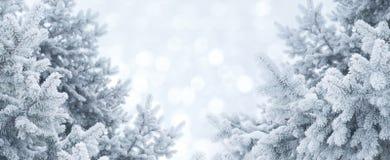 абстрактная зима предпосылки Ландшафт рождества с ветвями сосны в заморозке Стоковые Фотографии RF