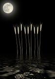 абстрактная золотистая луна травы Стоковое Изображение RF