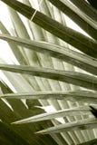 Абстрактная, линейная картина перекрывая palmetto выходит в Flori Стоковая Фотография RF