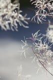 Абстрактная листва острословия предпосылок зимы Стоковое Фото