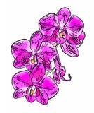 Абстрактная иллюстрация цветков орхидеи Стоковая Фотография