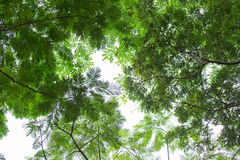 Абстрактная картина дерева нижнего взгляда на белой предпосылке Стоковое Фото