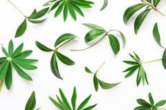 Абстрактная картина зеленых листьев, заводов на белой предпосылке стоковая фотография rf