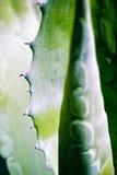 абстрактная картина листьев Стоковое Фото