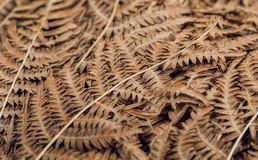 Абстрактная картина листьев autemn сухих Предпосылка старых лист куста папоротника в лесе Стоковые Фото