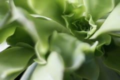 Абстрактная картина листьев succulents завода Стоковые Фото
