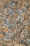 абстрактная картина лишайника Стоковое Фото