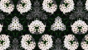 Абстрактная картина фото белого цветка Стоковое фото RF