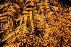 абстрактная конструкция осени Стоковая Фотография RF