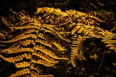 абстрактная конструкция осени Стоковое Фото