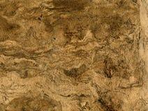абстрактная коричневая текстура стоковая фотография rf