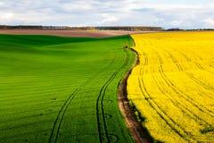 Абстрактная красочная картина полей Стоковое Изображение RF