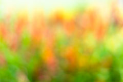 Абстрактная красочная предпосылка весны Стоковая Фотография RF