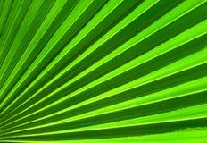 абстрактная ладонь листьев зеленого цвета крупного плана предпосылки Стоковое Изображение RF