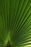 абстрактная ладонь листьев Стоковые Фотографии RF