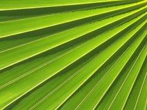 абстрактная ладонь листьев Стоковая Фотография RF