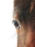 абстрактная лошадь стороны Стоковое Изображение RF