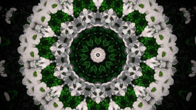 Абстрактная мандала белого цветка Стоковое Изображение RF