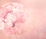 Абстрактная мягкая сладостная розовая предпосылка цветка от гвоздики цветет стоковые фотографии rf
