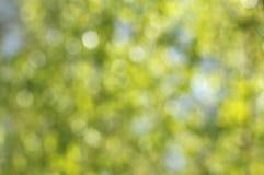 абстрактная нерезкость предпосылки Листья на предпосылке неба Стоковые Изображения RF