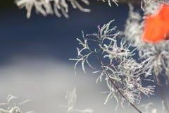 Абстрактная осенняя листва острословия предпосылок Стоковая Фотография RF
