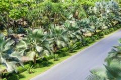 абстрактная пальма Стоковые Фотографии RF