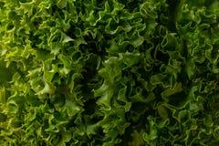 абстрактная предпосылка безшовная Зеленый салат выходит предпосылка Свежий салат покидает конец-вверх Стоковые Изображения RF