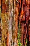 Абстрактная предпосылка деревянной текстуры стоковые фото