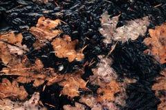 Абстрактная предпосылка зимы, оранжевые лист в замороженной воде стоковые изображения rf