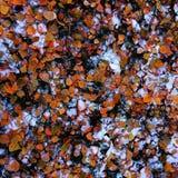 Абстрактная предпосылка листьев осени Стоковые Фотографии RF