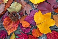 Абстрактная предпосылка листьев осени. стоковая фотография