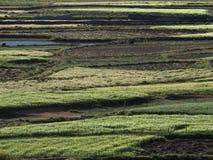 Абстрактная предпосылка прокладок зеленых полей среди коричневой земли, естественной картины Стоковые Фотографии RF