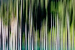 Абстрактная предпосылка пустых запачканных деревьев Стоковые Изображения