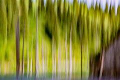 Абстрактная предпосылка пустых запачканных деревьев Стоковое Изображение RF
