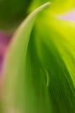Абстрактная предпосылка с падением в зеленых листьях Стоковая Фотография RF