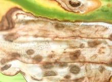 Абстрактная предпосылка, предпосылка с умирая листьями Стоковое Фото