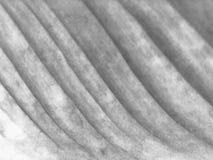 Абстрактная предпосылка, предпосылка с умирая листьями Стоковое фото RF