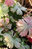 Абстрактная предпосылка травы в изморози стоковые изображения rf