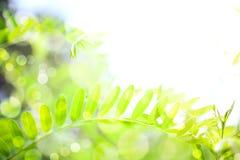 абстрактная предпосылка флористическая Стоковые Изображения