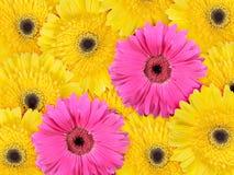 абстрактная предпосылка цветет розовый желтый цвет Стоковое фото RF